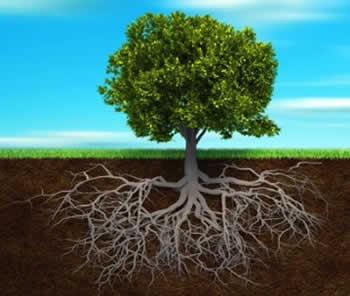 Ra ces o reto os cimentados en la palabra de dios for Arbol con raices y frutos
